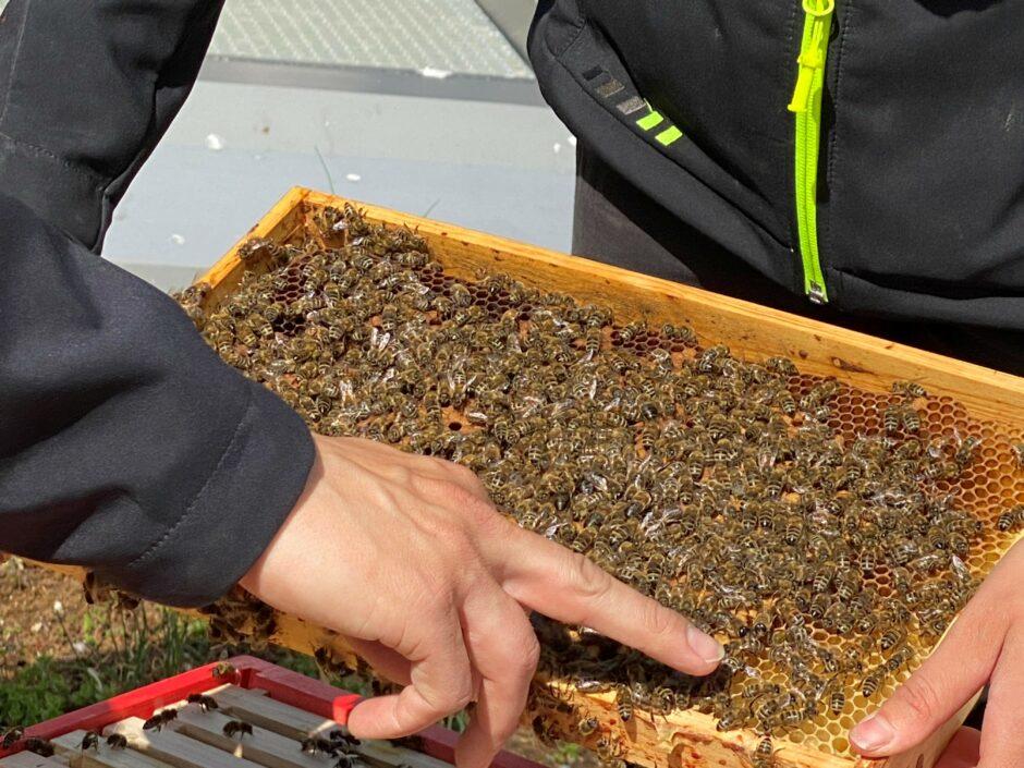 """Im Auftrag der Nachhaltigkeit – Tausende """"neue Mitarbeiter"""" für die WESPA unterwegs"""